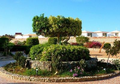 Hotel Coral Garden Safaga Ägypten (Foto)